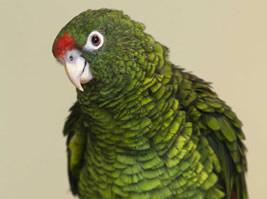 Pets 5