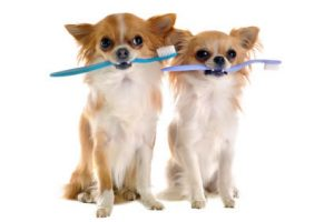 dogs and toothbrushes