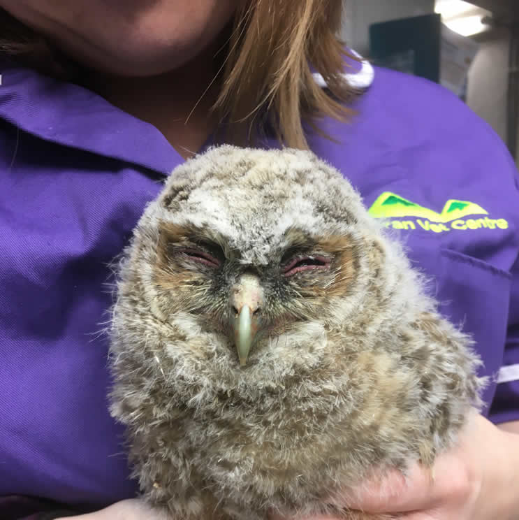 eleri richards and owl at Aran Vets